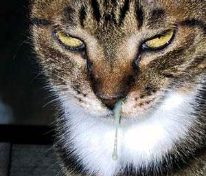 華厳の滝の猫