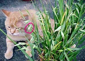 猫草ととらっち